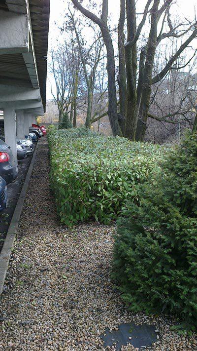 Empresa de jardiner a en le n jardiner a estalote for Empresas de jardineria en girona